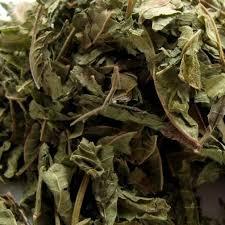 Tea tree, melaleuca alternifolia, de wonderolie van