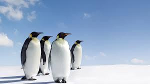 penguin desktop wallpaper. Plain Penguin Penguin Desktop Backgrounds And Wallpaper D
