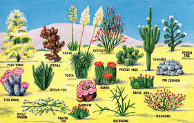 desert plants with names. Contemporary Names Desert Plants Named AridZones ClusterExpo Expo2015 Arid Environments  Are Extremely Diverse In With Desert Plants Names M