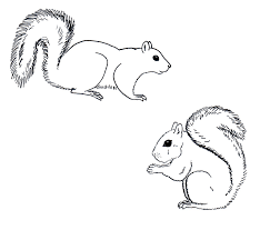 Small Picture Drawn line art squirrel tail Pencil and in color drawn line art
