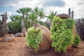 desert landscaping ideas with plants in pot