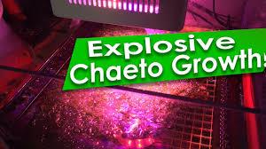Ufo Grow Light Refugium Reefdudes Evergrow Nova S2 Refugium Led Amazing Cheato Growth Chaeto Algae Growth