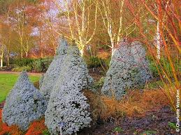 Small Picture 85 best Wintergarden images on Pinterest Winter garden