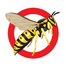 pest control eugene. Unique Eugene Pest Control Service Eugene  Wasp Art Intended T