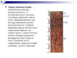 Реферат по теме Почвы России   hello html 7b5e055 jpg