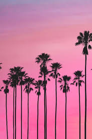 Palm trees tumblr header Palm Leaf Pink Palm Tree Wallpaper 756035 570x570 Candice Nur Permata Rusmandarizqy Wordpresscom Pink Palm Tree Wallpaper 42 Pictures