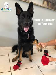 Bond And Co Dog Size Chart How To Measure And Pick The Right Size Dog Boots