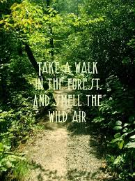 Forest Quotes Extraordinary Take A Walk In The Forest And Smell The Wild Air Nature Quotes