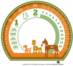 Dog Chart For Age How To Calculate A Dogs Age In Dog Years Design Milk