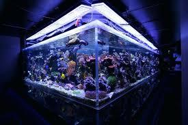 best lighting reef tank for r aquarium schedule