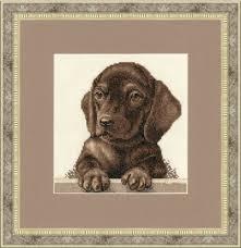 Dachshund Color Chart Dachshund Puppy
