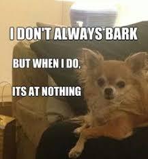 funny whacky or interesting on Pinterest   Awkward Yeti ... via Relatably.com