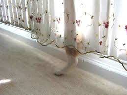 Image result for fail at hiding curtain kids cats