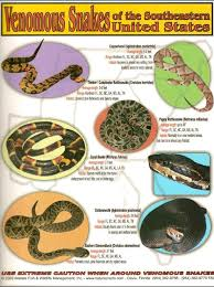 1000 Images About Venomous Snakes On Pinterest Snakes