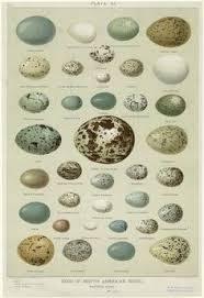 Image Result For Bird Egg Identification Chart For Ontario