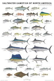 Huckberry Print Essentials Saltwater Gamefish Fish