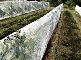 japanese beetle netting