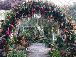 transport yourself to singapore at the the new york botanical gardens orchid show
