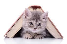 """Résultat de recherche d'images pour """"les chat belle"""""""