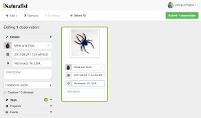Black spider mascot costume richmond spiders mascot costumes. University Of Richmond S Spider Mite Mascot Colin Purrington