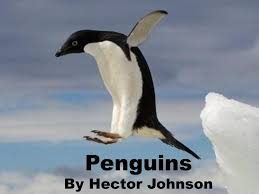 Penguins By Hector Johnson. - ppt download