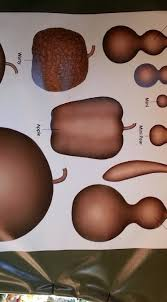 Gourd Identification Chart Gourd Chart Archives Food Blog