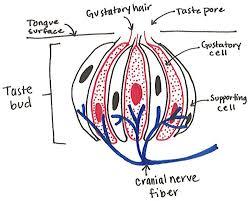 The Anatomy Of Flavor Decoding Delicious