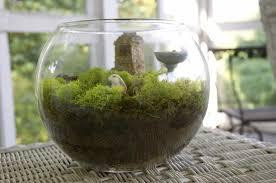 ayisg garden in a jar 2