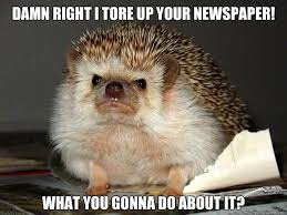 I ate his liver with some fava beans and a nice chianti.  FfTFfTFfTFfTFfTFfTFfTFfT - Angry Hedgehog - quickmeme