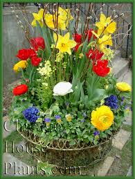 Small Picture 18 best SPRING GARDEN CONTAINER images on Pinterest Garden