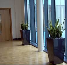 interior landscaping office. Hallway Office Plants From Ambius Interior Landscaping