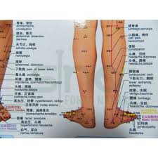 Leg Acupressure Points Chart Reflexology Points In The Leg Reflexology Points