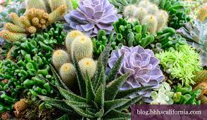 drought resistant garden. California Gardening Drought Resistant Garden