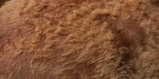 hair coat conundrums