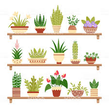 Indoor home office plants royalty Silhouette Icons Indoor Home Office Plants Royalty Vector Majesty Palm In 925 In Forooshinocom Indoor Home Office Plants Royalty Homegram Illustration Of