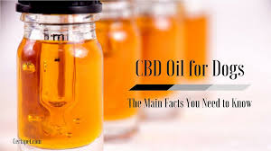 Hempworx Dosage Chart For Dogs Cbd Oil For Dogs What You Need To Know Certapet