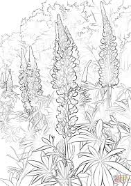 Printable Coloring Pages For Kids Bluebonnet Flower Coloring Page