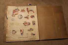 Full Book Of 8 Antique 1910 Medical Charts-School Anatomy Physiology ...