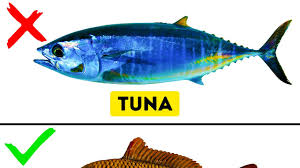 pic of fish. Unique Pic 9 Kinds Of Fish You Should Never Eat Inside Pic Of F