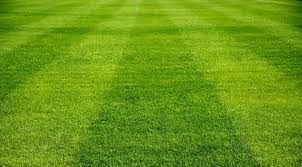 grass soccer field with goal. Simple Goal Field With Grass Soccer Field Goal C