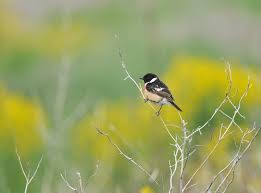 「夏の鳥」の画像検索結果