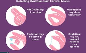 Cervical Mucus Chart Example Charting Dry Watery And Fertile Cervical Mucus