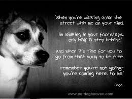 A Dog's Prayer For Grieving Humans Happiness Awaits I Believe In Magnificent Dog Death Quotes