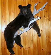 bear taxidermy black bear mount