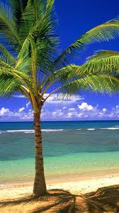 Iphone 4 / 4s wallpapers. Palm Tree Iphone Wallpaper 5d9m198 Picserio Com