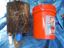 bucket gardening. Bucket Garden 2 Gardening A