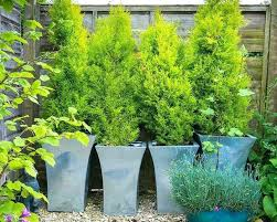 patio plants for shade patio plants patio plant ideas patio plants ideas outdoor potted shade plants patio plants for shade