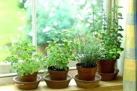 hydroponic herb garden indoor hydroponic herb garden awesome hydroponic herb garden indoor indoor hydroponic herb garden