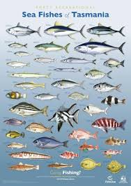 Fishes Of Tasmania Posters Department Of Primary