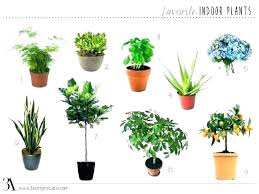 diffe house plants domestic architecture meaning in architects day vinyl home plants names common indoor house